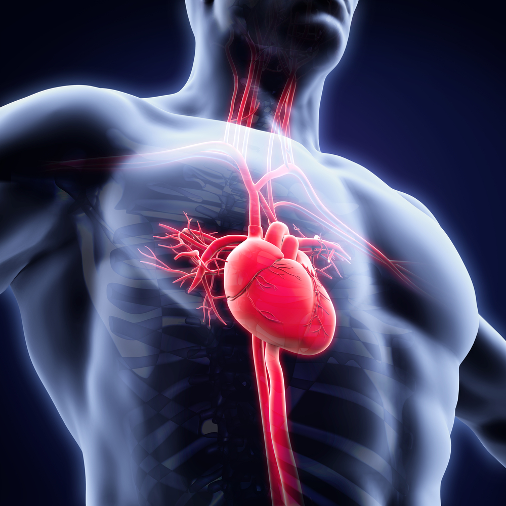 Study Advances Understanding of Heart Cells' Regeneration